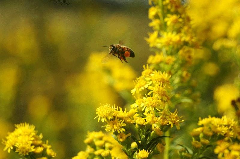 A Bee Happy Journey ~ Part II of III