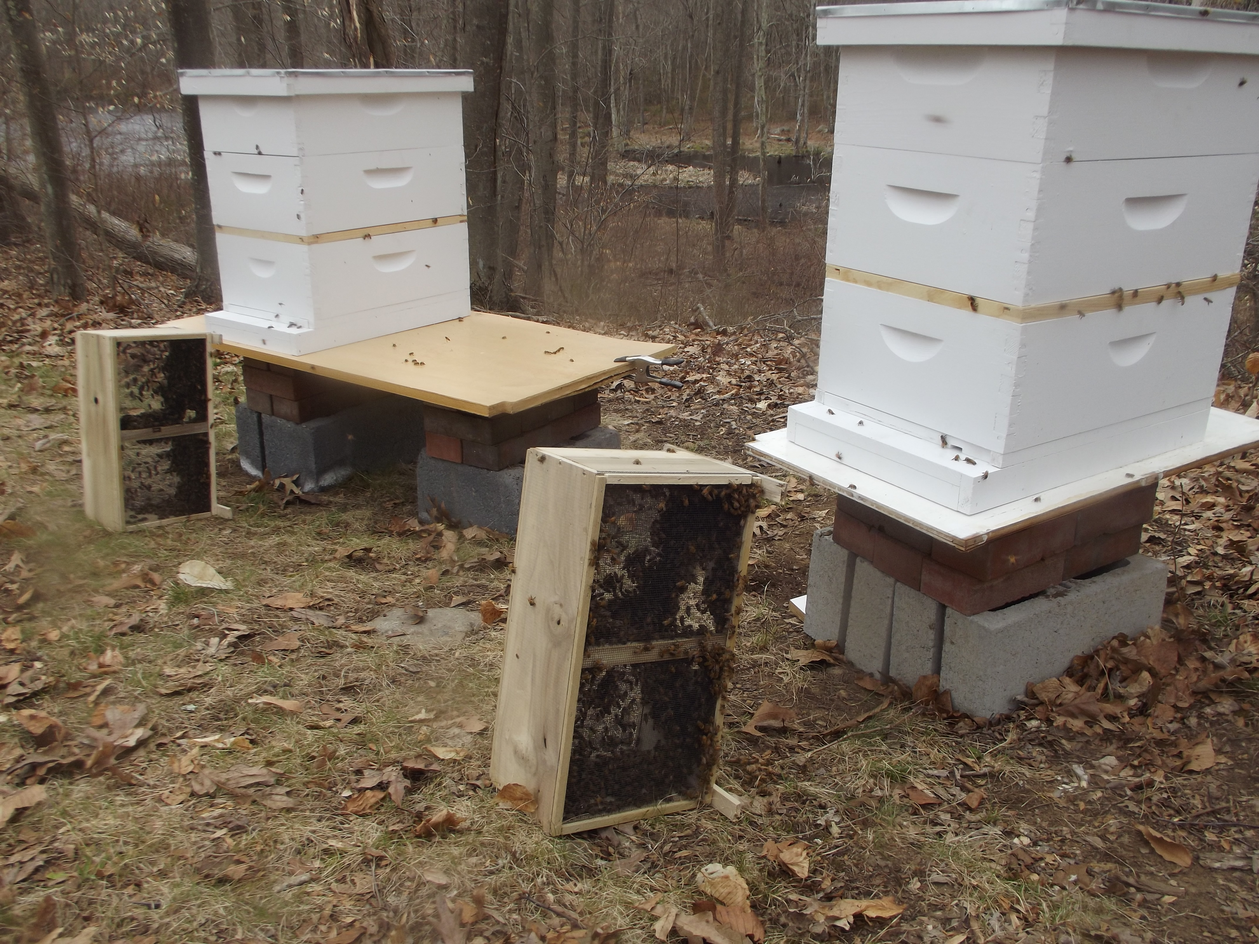 The Bee Chronicles:  A New Home Part 2