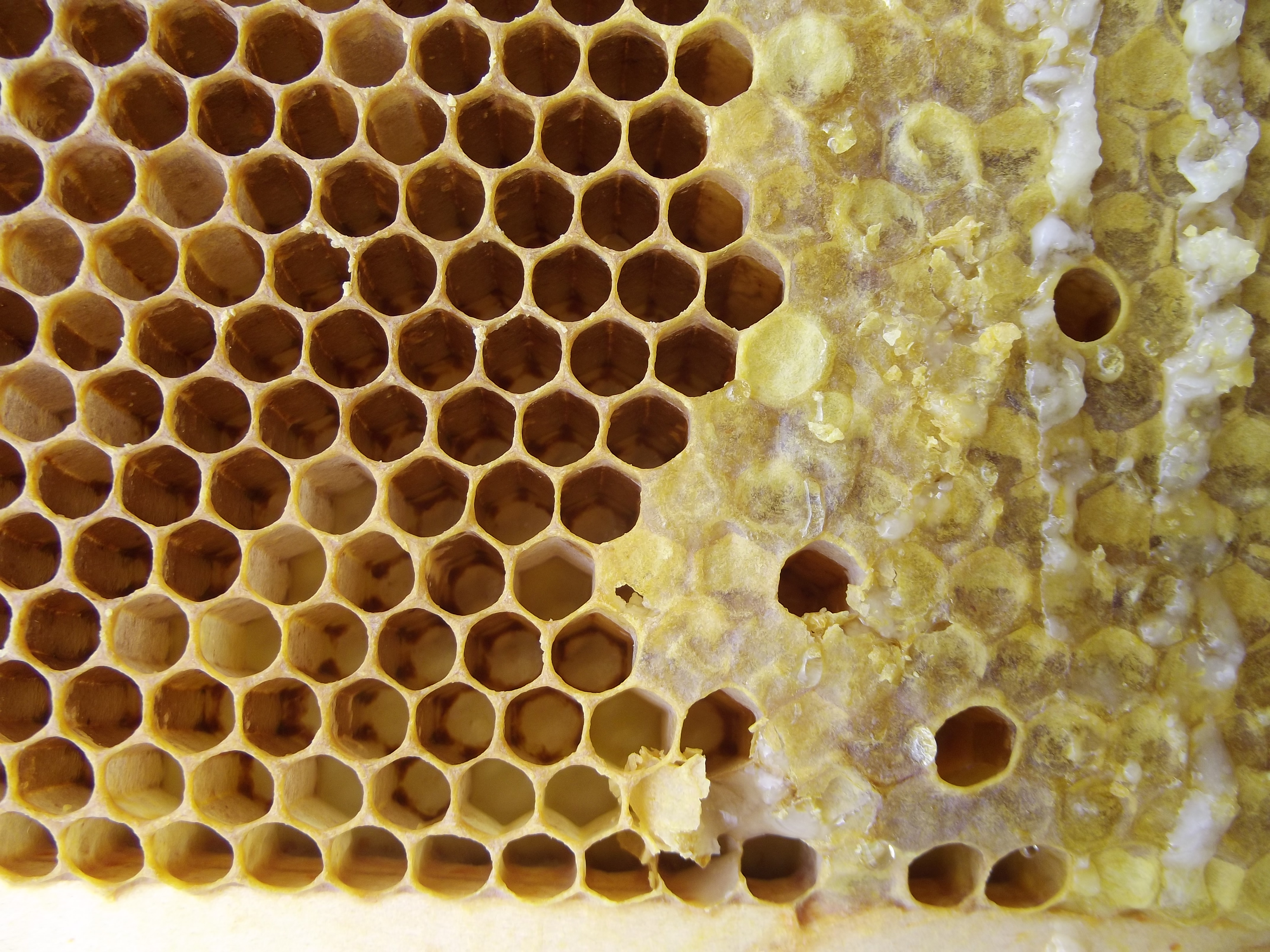 Ten Things You Might Not Know About Beeswax