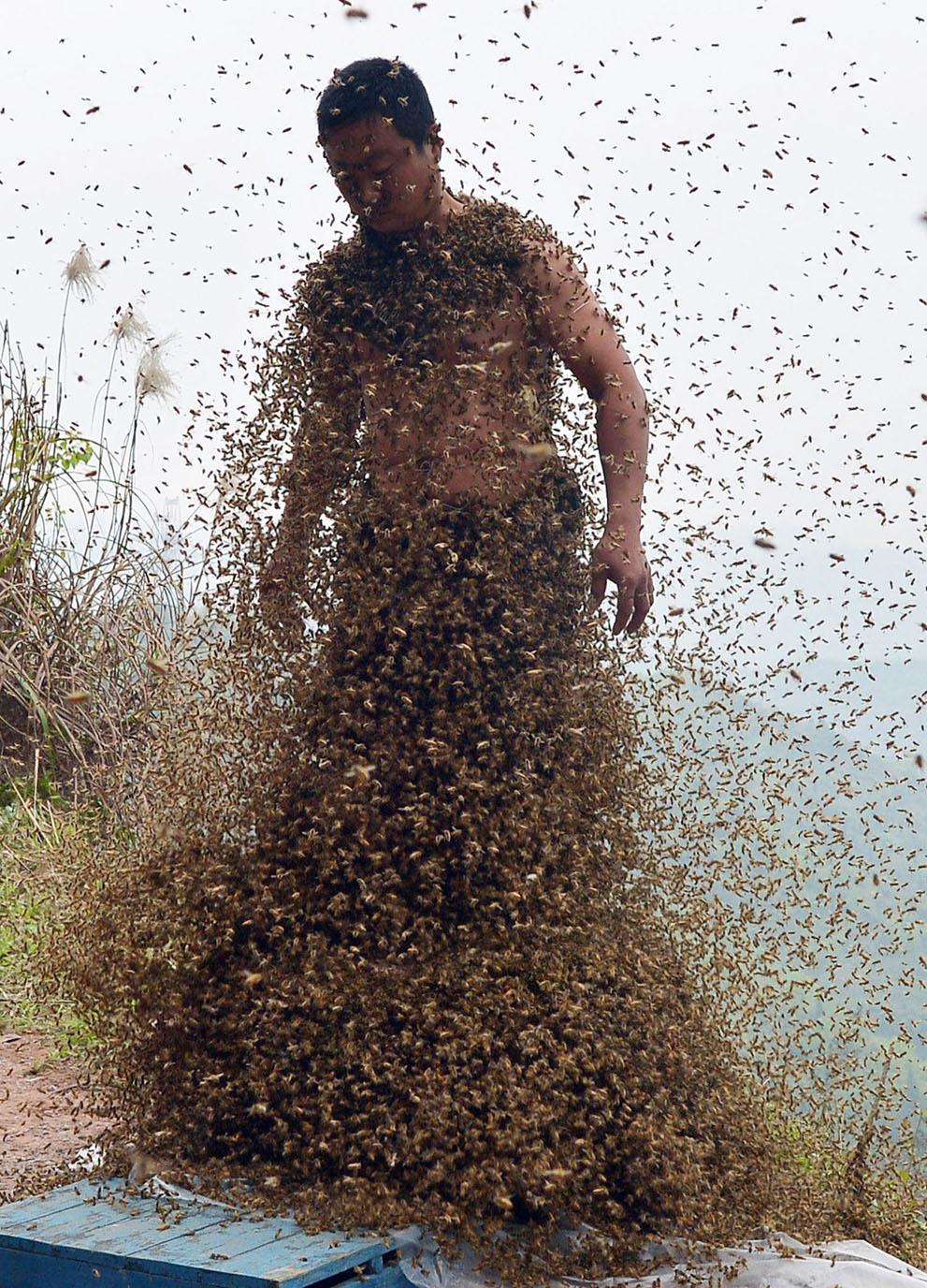 More Than a Bee Beard