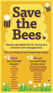 It's easier than you think to save the honeybees.