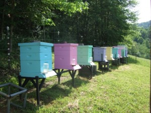 Nice placement of beehives.