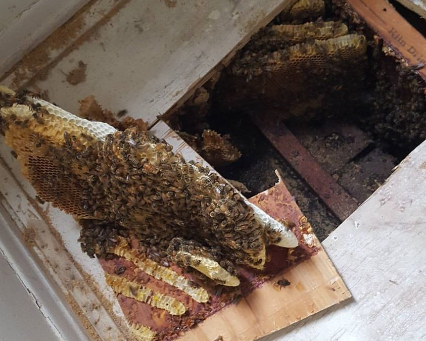 Don't Try to Get Rid of Those Bees Yourself!